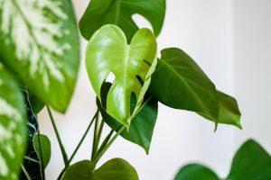 4 Tips om je kamer- en tuinplanten door de winter te loodsen