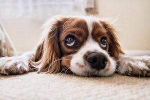 Alleen het beste is goed genoeg voor uw hond