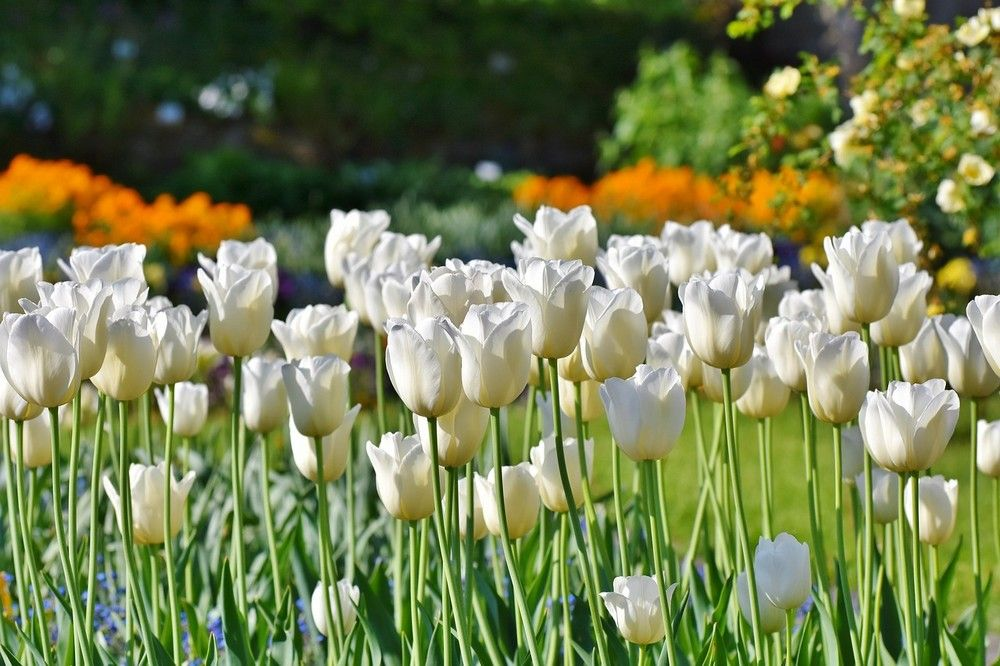 Breng zelf je tuin tot bloei
